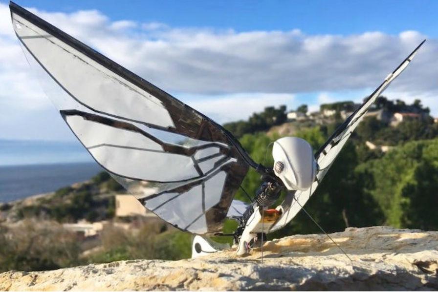 MetaFly, l'objet volant comme un oiseau conçu en France – Loisirs